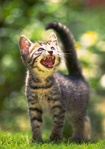 cat_0007.jpg